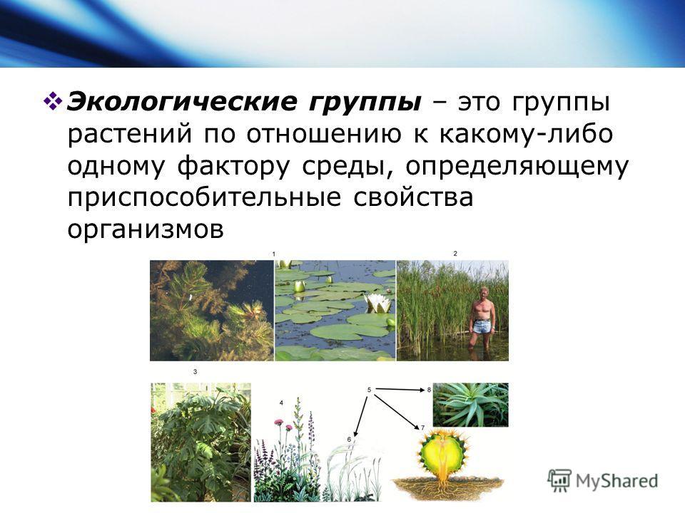 Экологические группы – это группы растений по отношению к какому-либо одному фактору среды, определяющему приспособительные свойства организмов