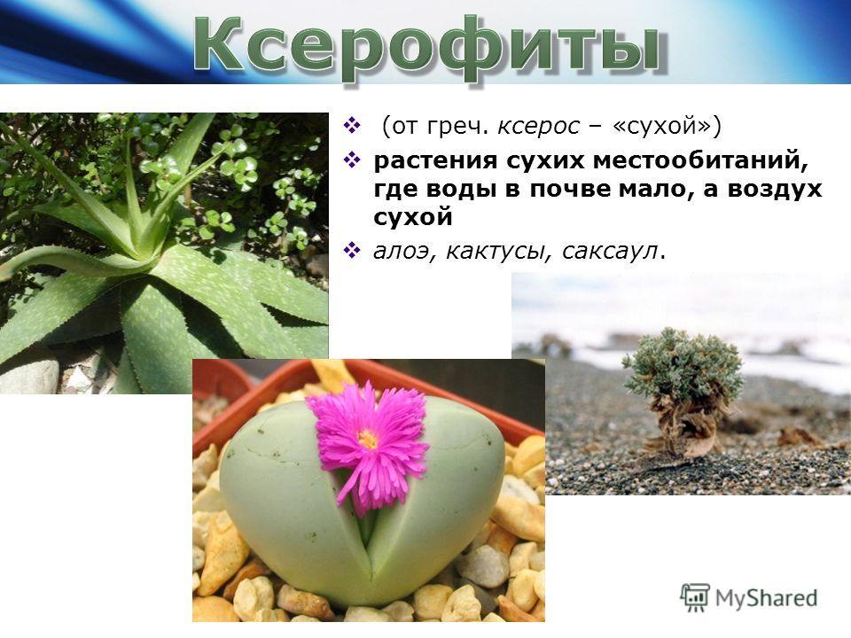 (от греч. ксерос – «сухой») растения сухих местообитаний, где воды в почве мало, а воздух сухой алоэ, кактусы, саксаул.