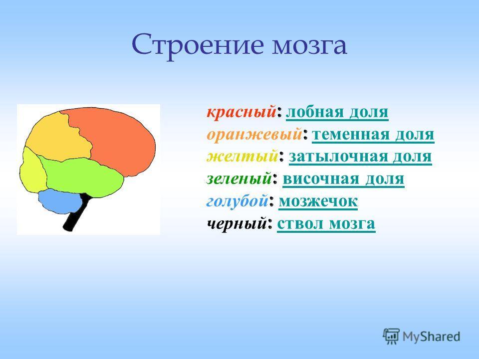 Строение мозга красный : лобная доля оранжевый : теменная доля желтый : затылочная доля зеленый : височная доля голубой : мозжечок черный : ствол мозга лобная доля теменная доля затылочная доля височная доля мозжечок ствол мозга