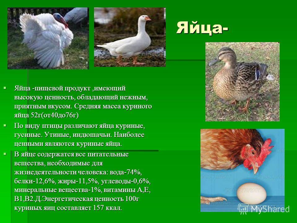 Яйца- Яйца- Яйца -пищевой продукт,имеющий высокую ценность, обладающий нежным, приятным вкусом. Средняя масса куриного яйца 52г(от40до76г) Яйца -пищевой продукт,имеющий высокую ценность, обладающий нежным, приятным вкусом. Средняя масса куриного яйца