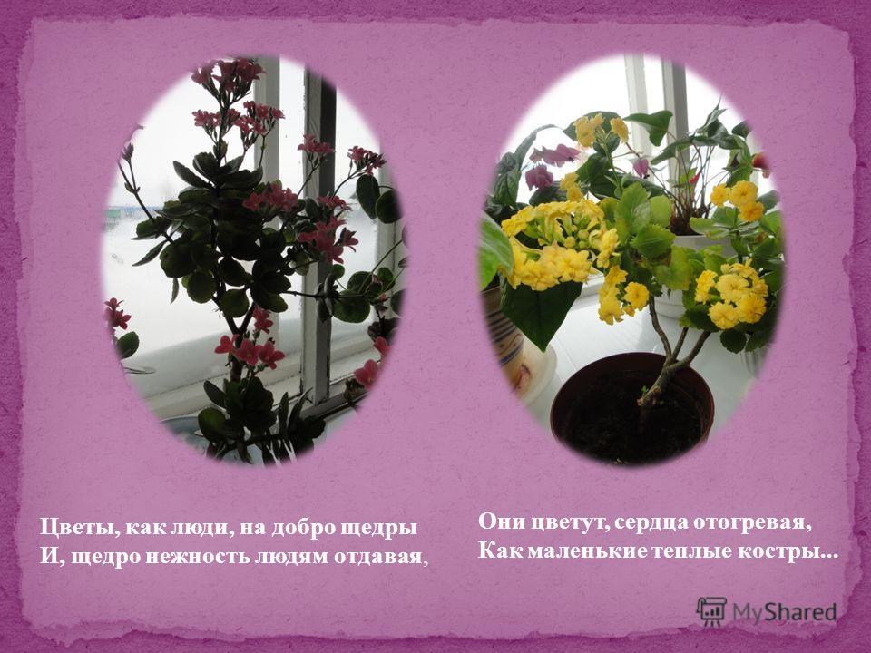 Цветы, как люди, на добро щедры И, щедро нежность людям отдавая, Они цветут, сердца отогревая, Как маленькие теплые костры...