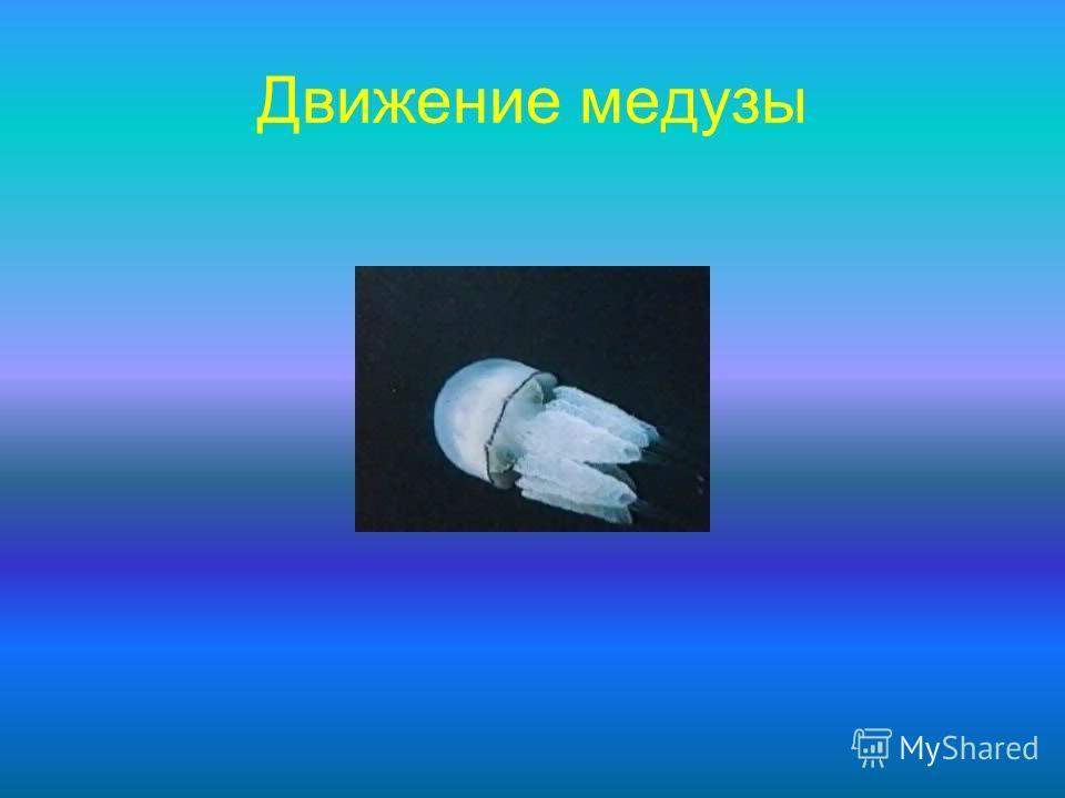 Движение медузы