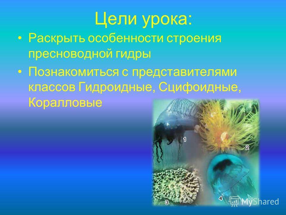 Цели урока: Раскрыть особенности строения пресноводной гидры Познакомиться с представителями классов Гидроидные, Сцифоидные, Коралловые