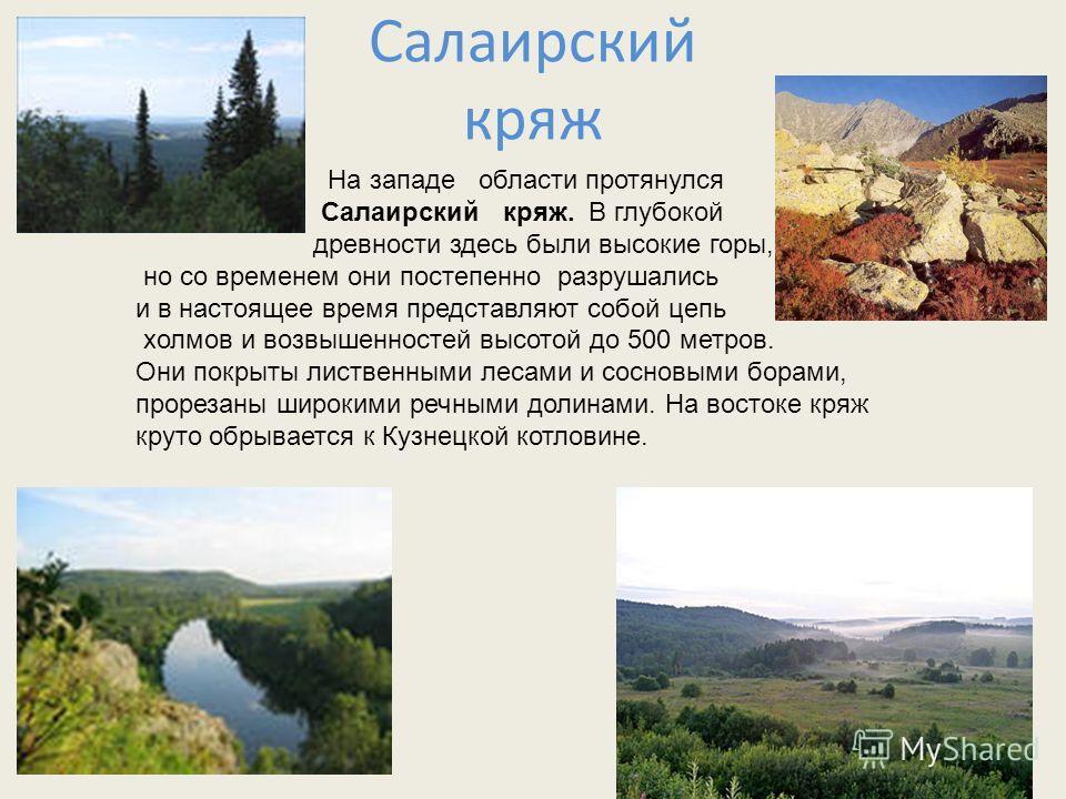 Салаирский кряж На западе области протянулся Салаирский кряж. В глубокой древности здесь были высокие горы, но со временем они постепенно разрушались и в настоящее время представляют собой цепь холмов и возвышенностей высотой до 500 метров. Они покр
