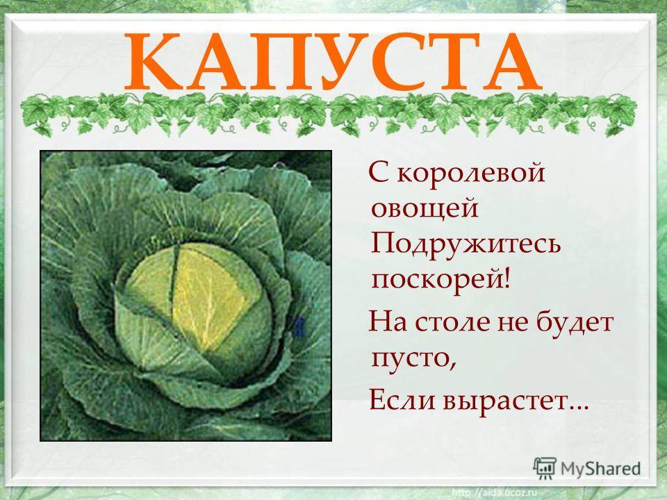 КАПУСТА С королевой овощей Подружитесь поскорей! На столе не будет пусто, Если вырастет...