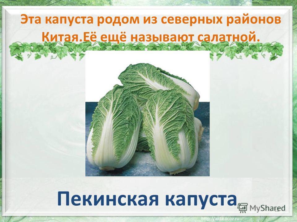 Эта капуста родом из северных районов Китая.Её ещё называют салатной. Пекинская капуста 12