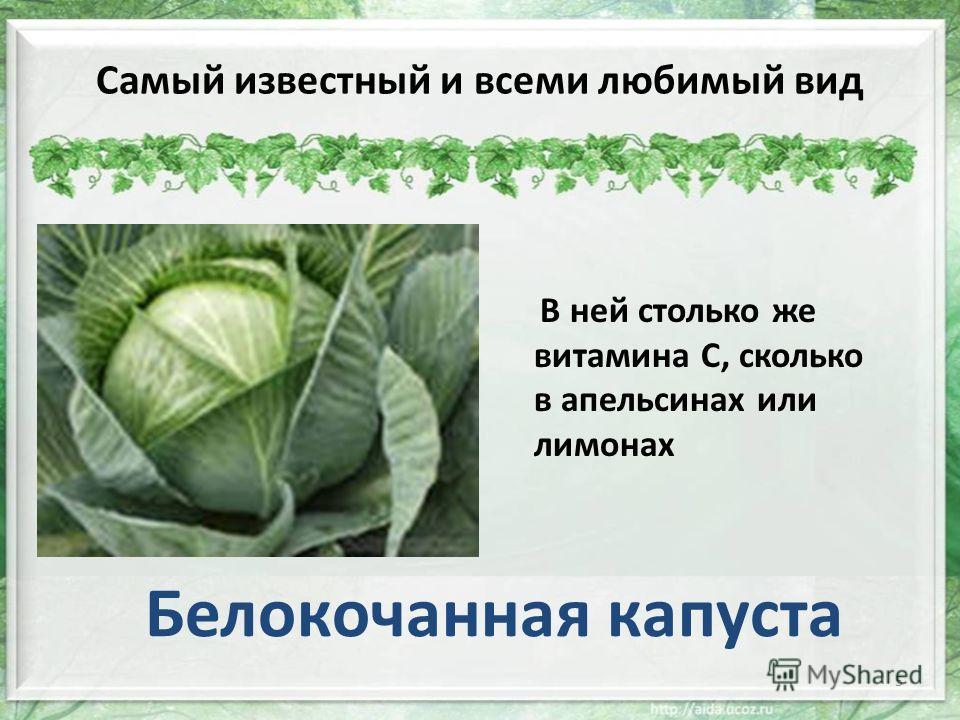 Самый известный и всеми любимый вид В ней столько же витамина С, сколько в апельсинах или лимонах Белокочанная капуста 5