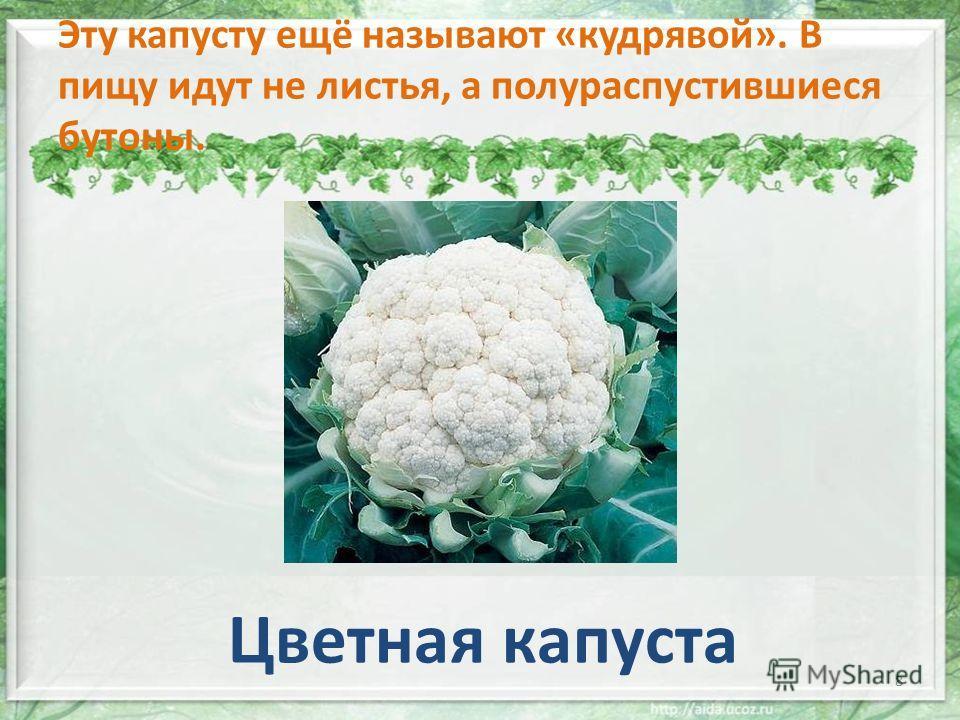 Эту капусту ещё называют «кудрявой». В пищу идут не листья, а полураспустившиеся бутоны.. Цветная капуста 8