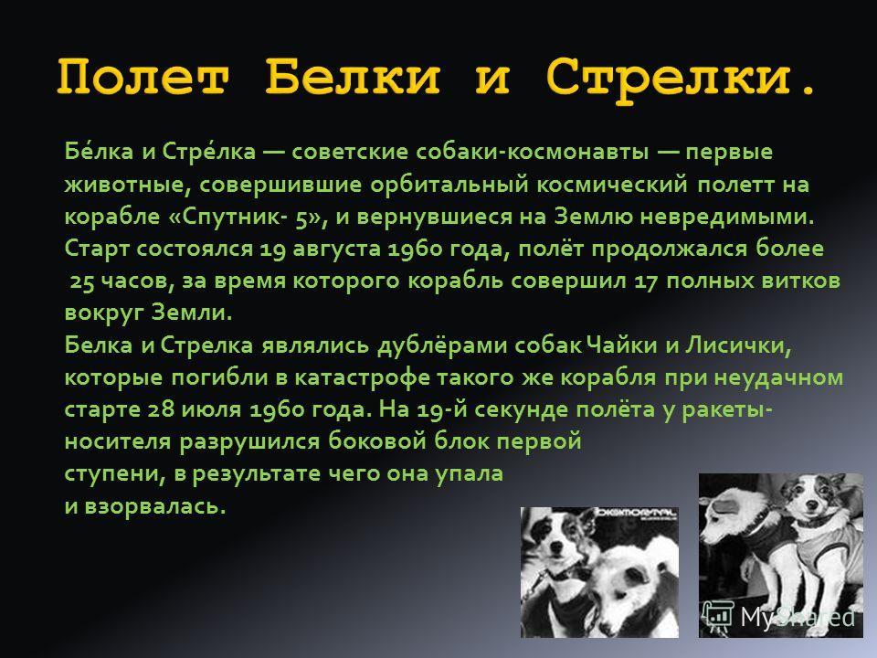 Имевшийся технический задел и опыт ракетных исследований позволил Сергею Королеву менее чем за месяц создать и 3 ноября 1957 был запущен второй спутник с собакой Лайкой на борту. Этот эксперимент доказал, что длительная невесомость не смертельна для
