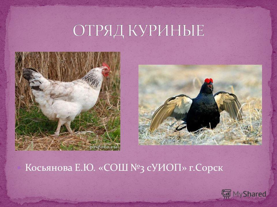 Косьянова Е.Ю. «СОШ 3 сУИОП» г.Сорск