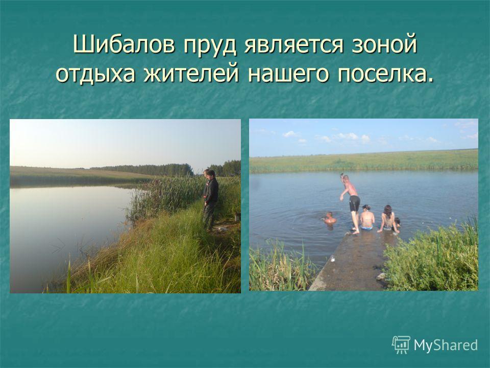 Шибалов пруд является зоной отдыха жителей нашего поселка.