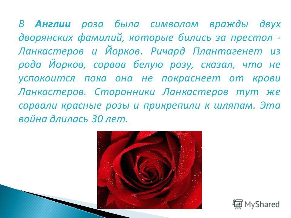 В Англии роза была символом вражды двух дворянских фамилий, которые бились за престол - Ланкастеров и Йорков. Ричард Плантагенет из рода Йорков, сорвав белую розу, сказал, что не успокоится пока она не покраснеет от крови Ланкастеров. Сторонники Ланк