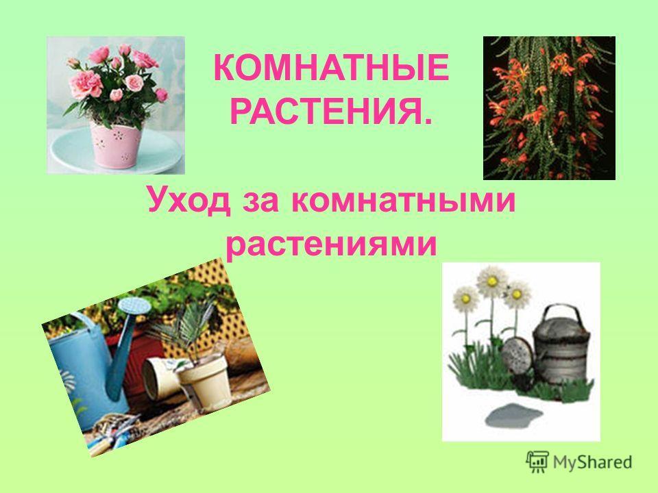 КОМНАТНЫЕ РАСТЕНИЯ. Уход за комнатными растениями