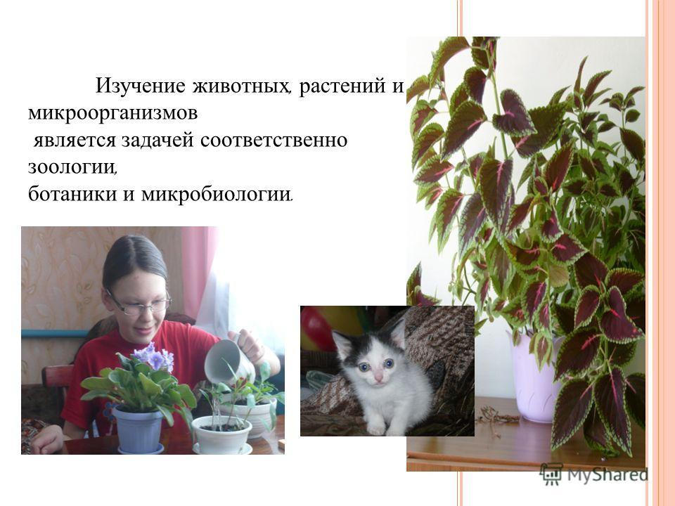 Изучение животных, растений и микроорганизмов является задачей соответственно зоологии, ботаники и микробиологии.