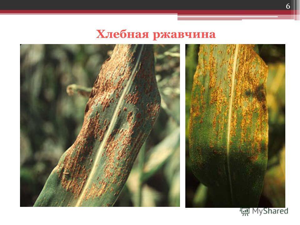 грибы паразиты человека описание
