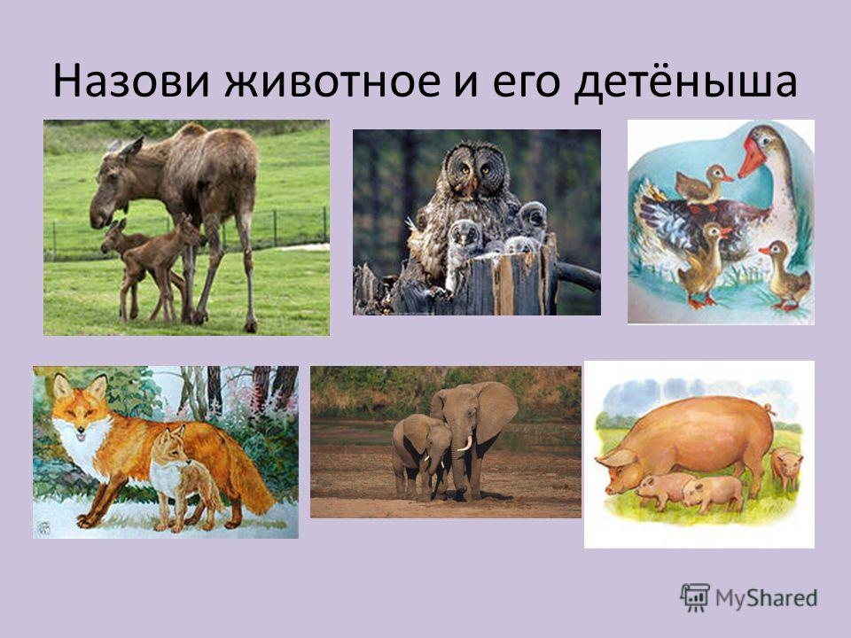 Назови животное и его детёныша
