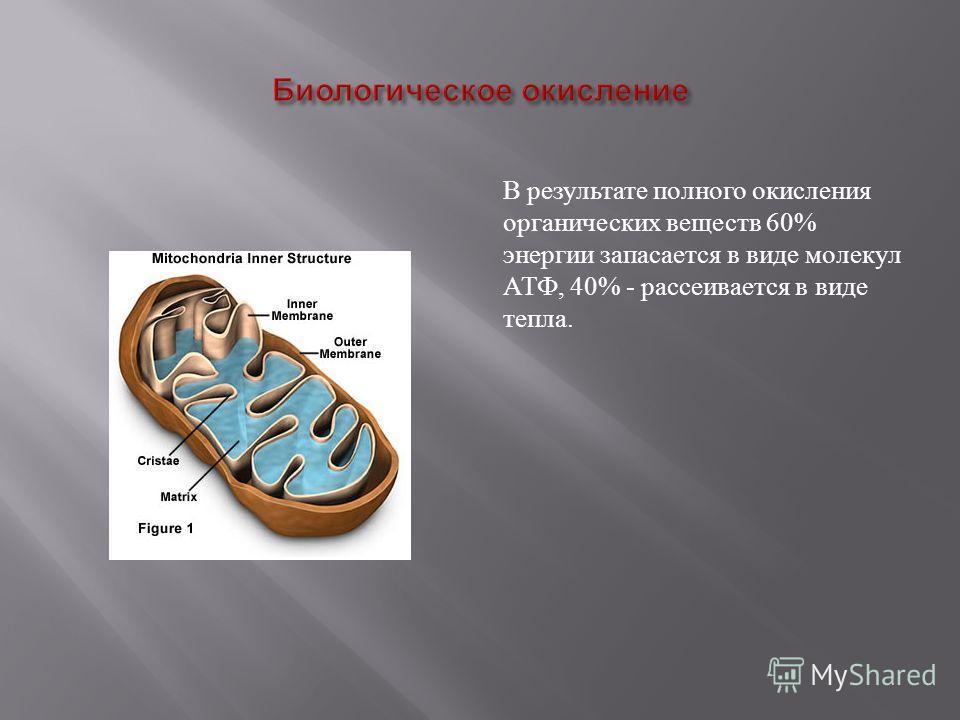 В результате полного окисления органических веществ 60% энергии запасается в виде молекул АТФ, 40% - рассеивается в виде тепла.