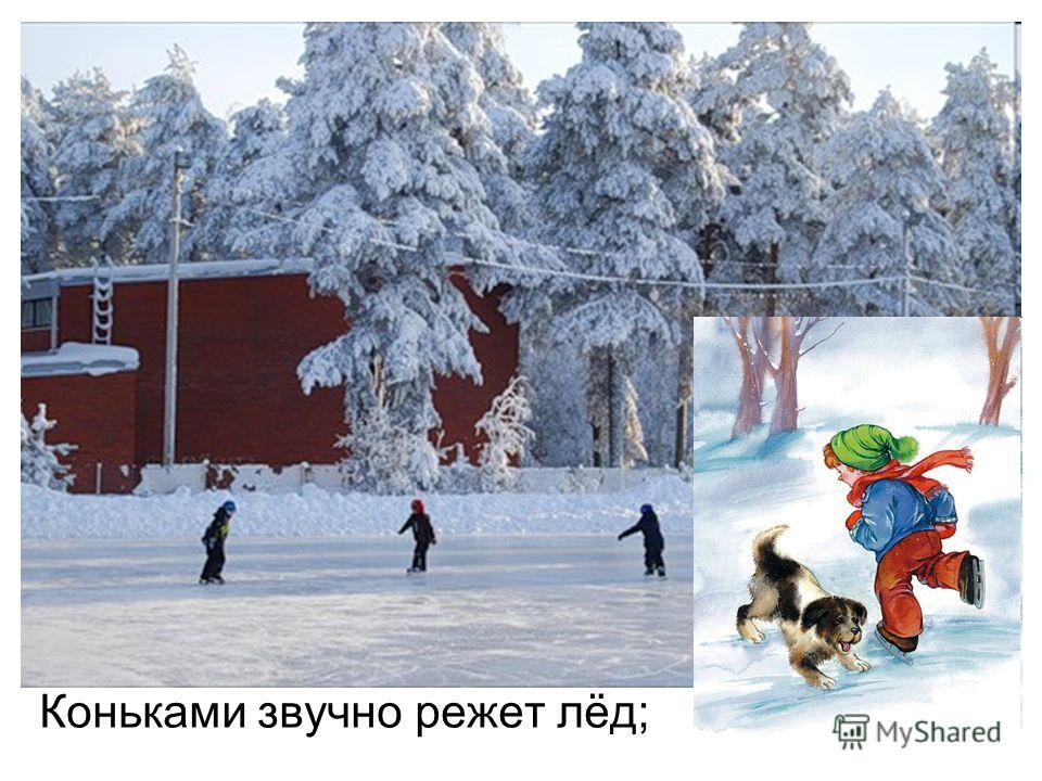 Коньками звучно режет лёд;