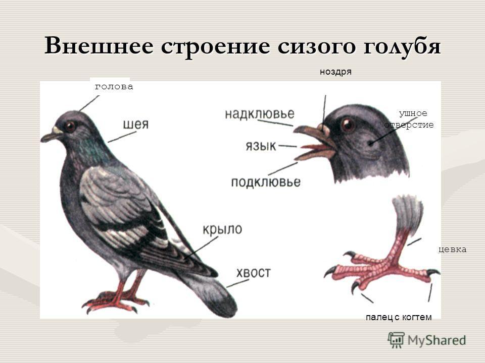 Класс птицы местообитания и внешнее