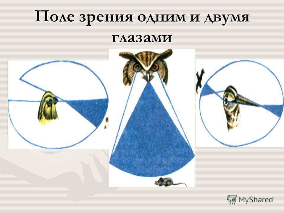 Внешнее строение сизого голубя ушное отверстие цевка палец с когтем ноздря голова