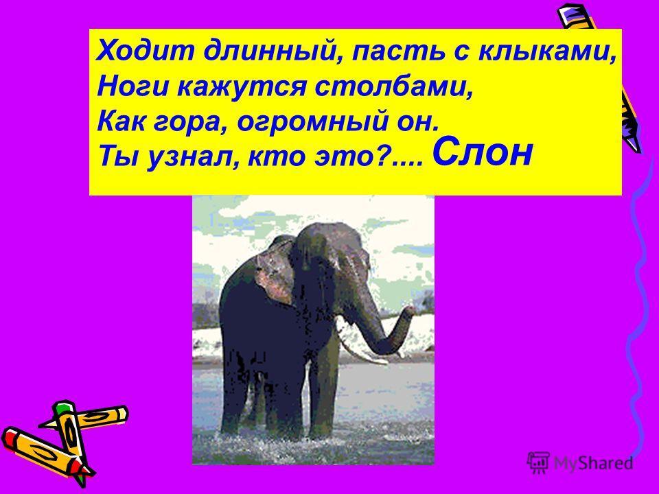 Ходит длинный, пасть с клыками, Ноги кажутся столбами, Как гора, огромный он. Ты узнал, кто это?.... Слон