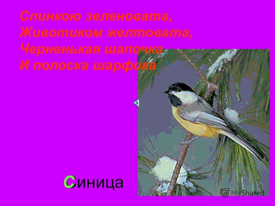 СиницаС Спинкою зеленовата, Животиком желтовата, Черненькая шапочка И полоска шарфика