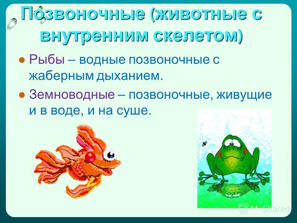 Позвоночные ( животные с внутренним скелетом ) Рыбы – водные позвоночные с жаберным дыханием. Земноводные – позвоночные, живущие и в воде, и на суше.