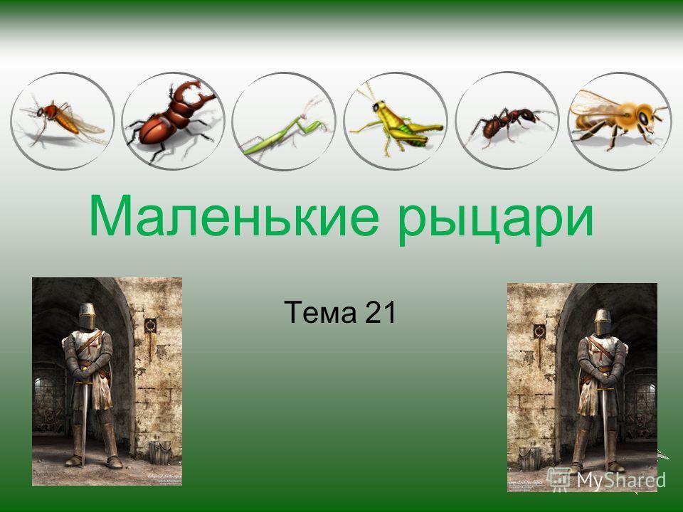 Маленькие рыцари Тема 21