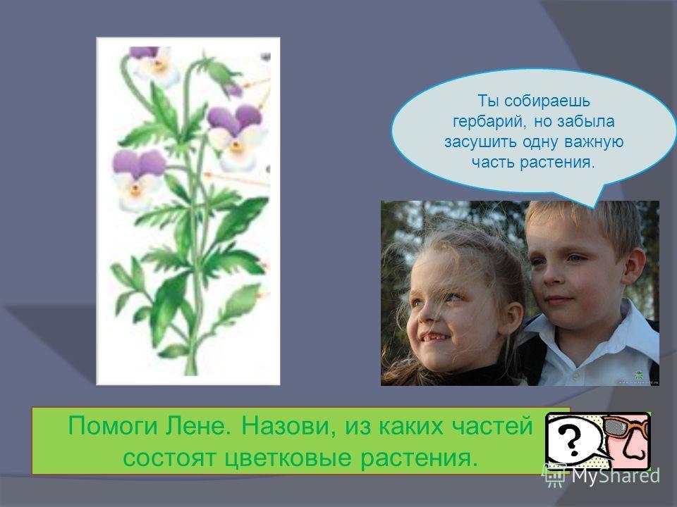 Ты собираешь гербарий, но забыла засушить одну важную часть растения. Помоги Лене. Назови, из каких частей состоят цветковые растения.