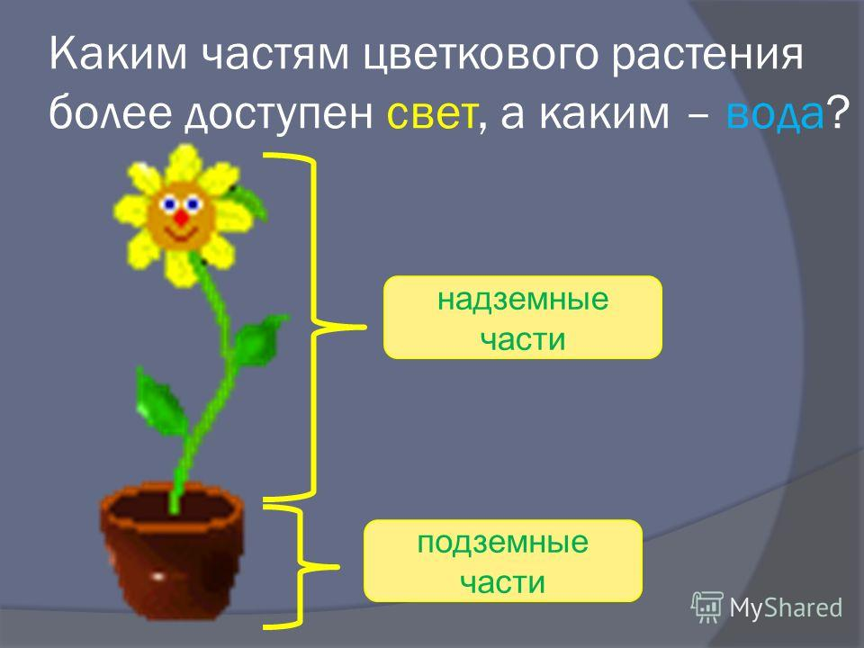 Каким частям цветкового растения более доступен свет, а каким – вода? надземные части подземные части
