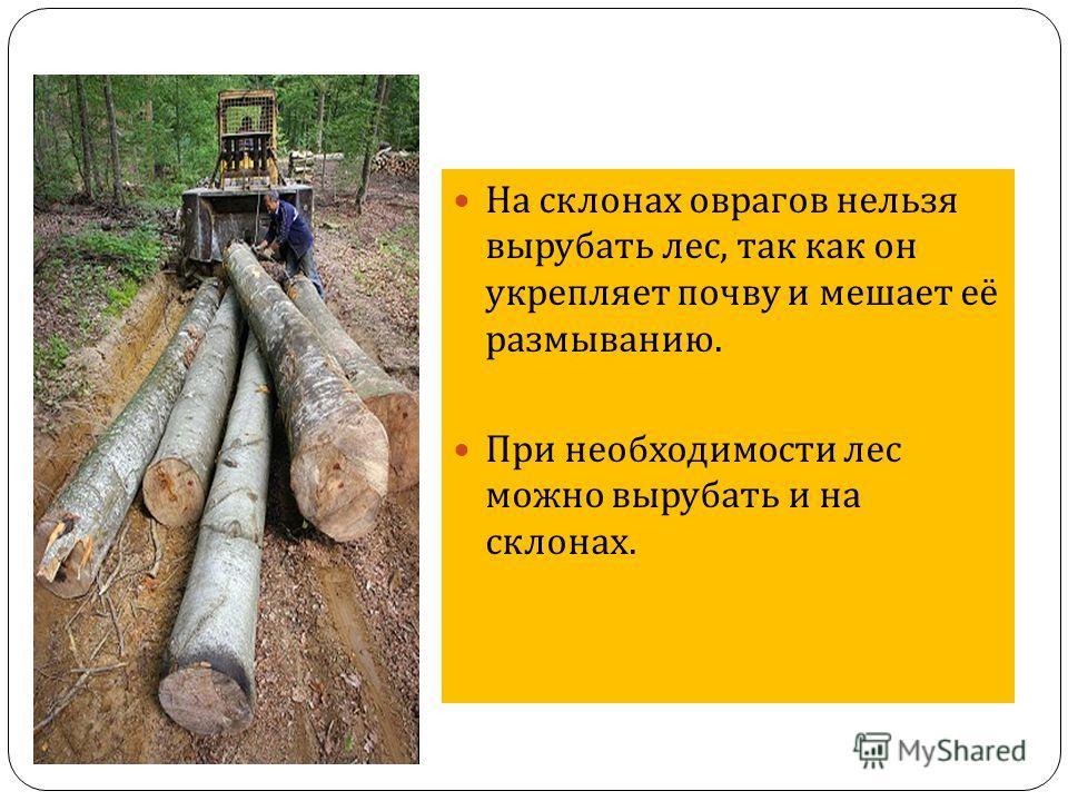 На склонах оврагов нельзя вырубать лес, так как он укрепляет почву и мешает её размыванию. При необходимости лес можно вырубать и на склонах.