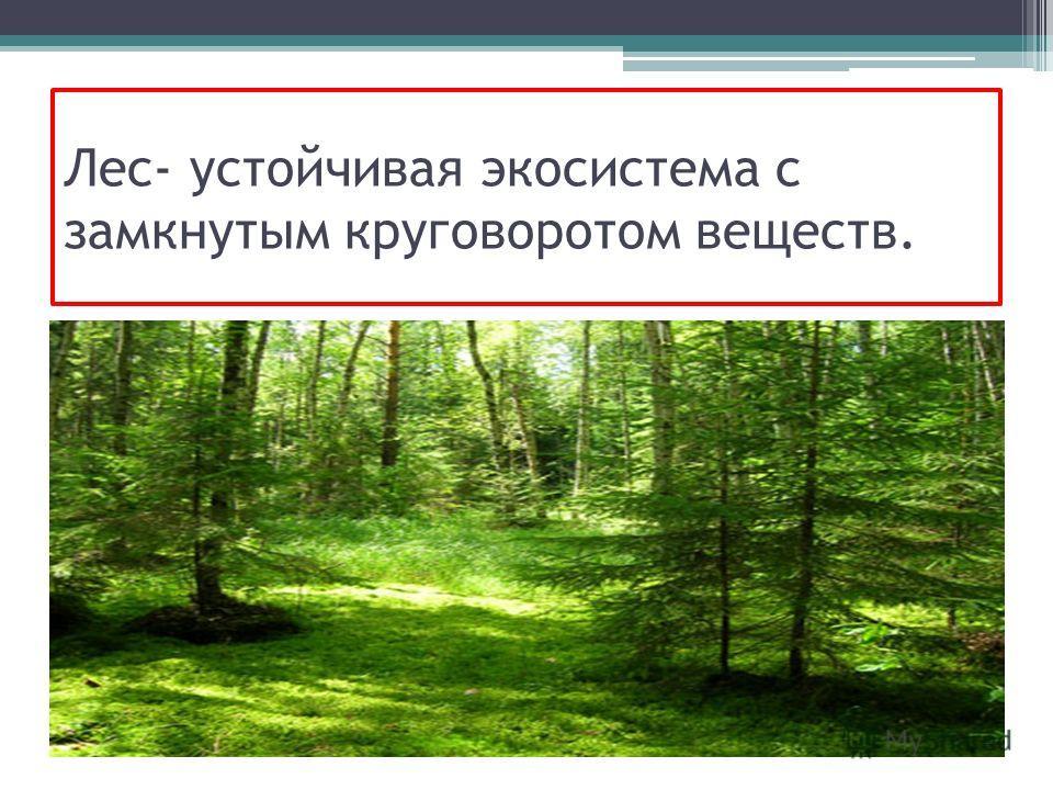 Лес- устойчивая экосистема с замкнутым круговоротом веществ.