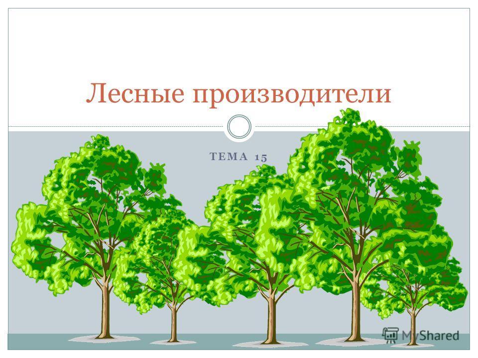 ТЕМА 15 Лесные производители
