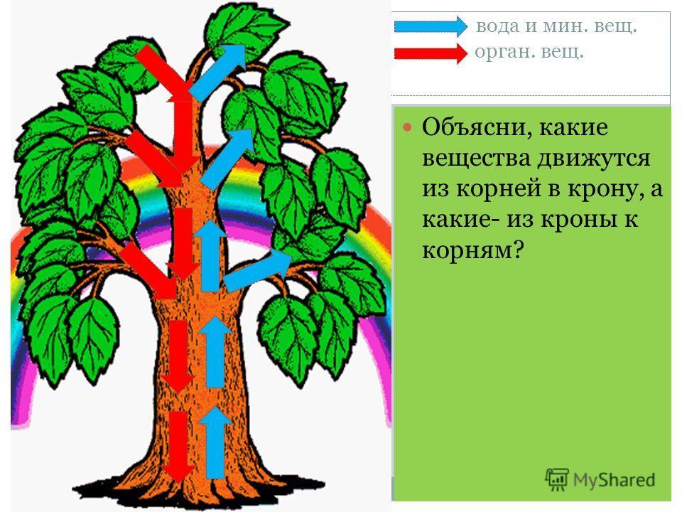 вода и мин. вещ. орган. вещ. Объясни, какие вещества движутся из корней в крону, а какие- из кроны к корням?