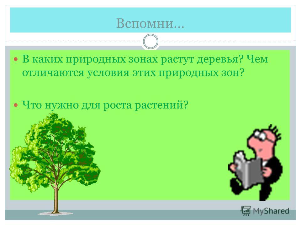 Вспомни… В каких природных зонах растут деревья? Чем отличаются условия этих природных зон? Что нужно для роста растений?