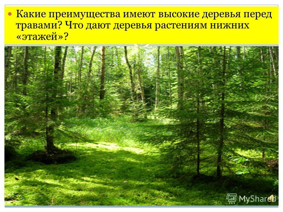 Какие преимущества имеют высокие деревья перед травами? Что дают деревья растениям нижних «этажей»?