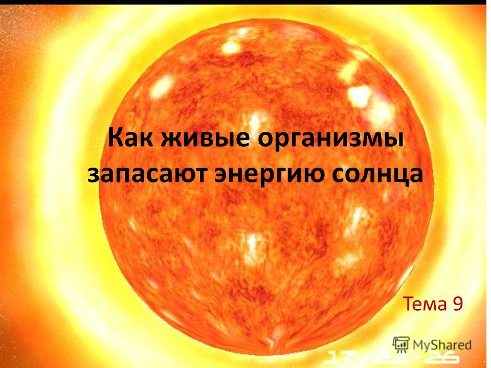 Как живые организмы запасают энергию солнца Тема 9