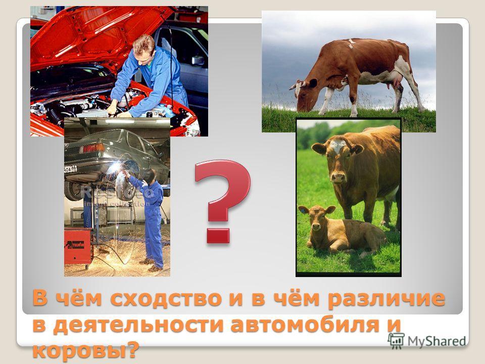 В чём сходство и в чём различие в деятельности автомобиля и коровы?