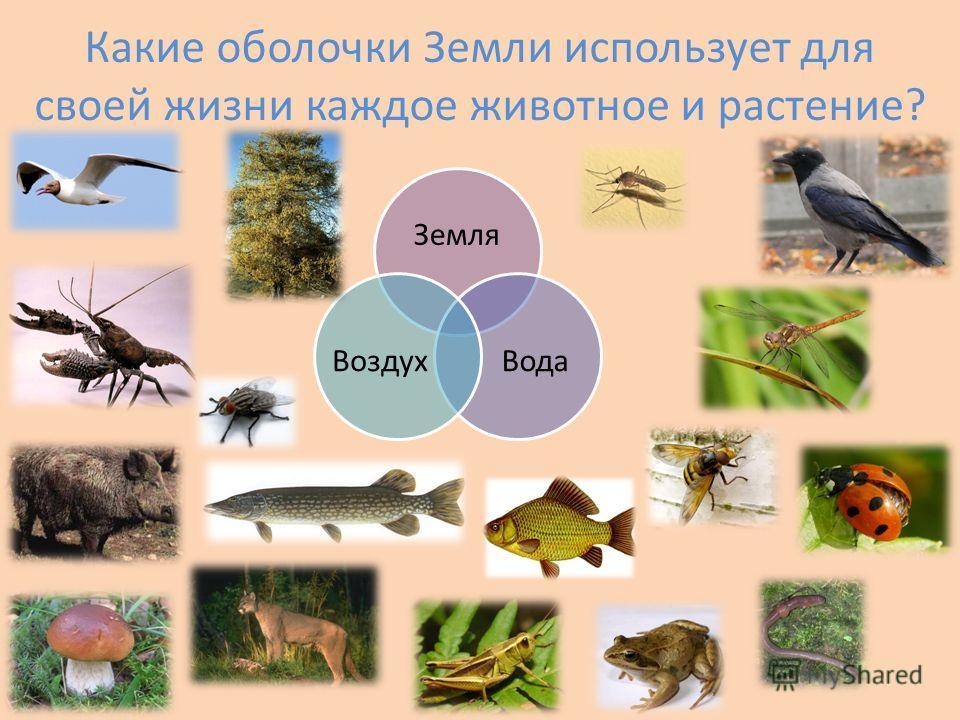 Какие оболочки Земли использует для своей жизни каждое животное и растение? Земля ВодаВоздух
