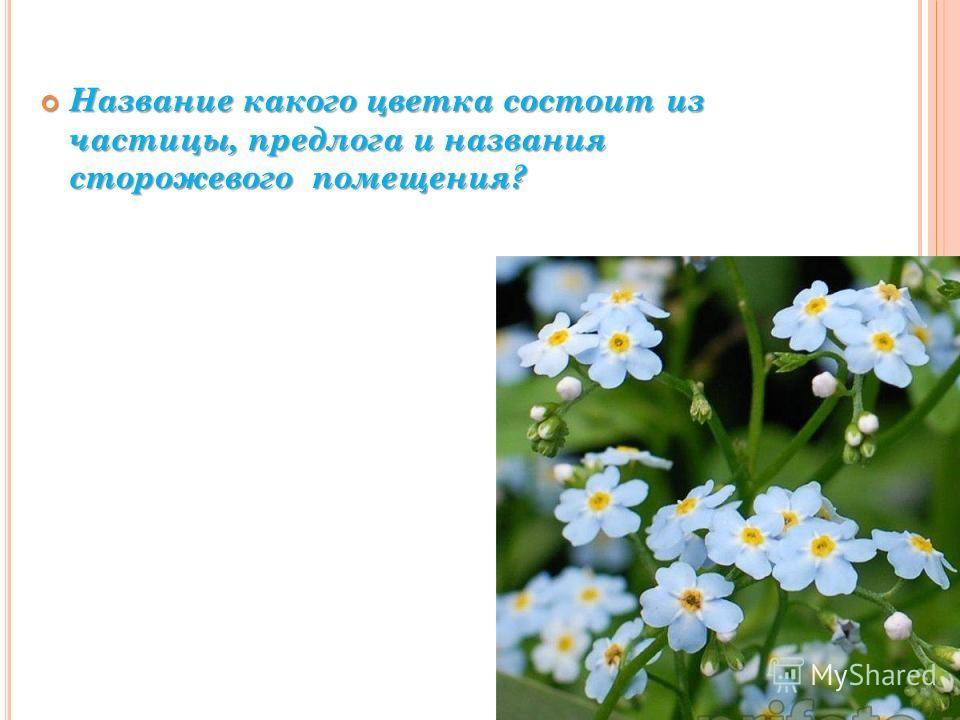 Название какого цветка состоит из частицы, предлога и названия сторожевого помещения? Название какого цветка состоит из частицы, предлога и названия сторожевого помещения?