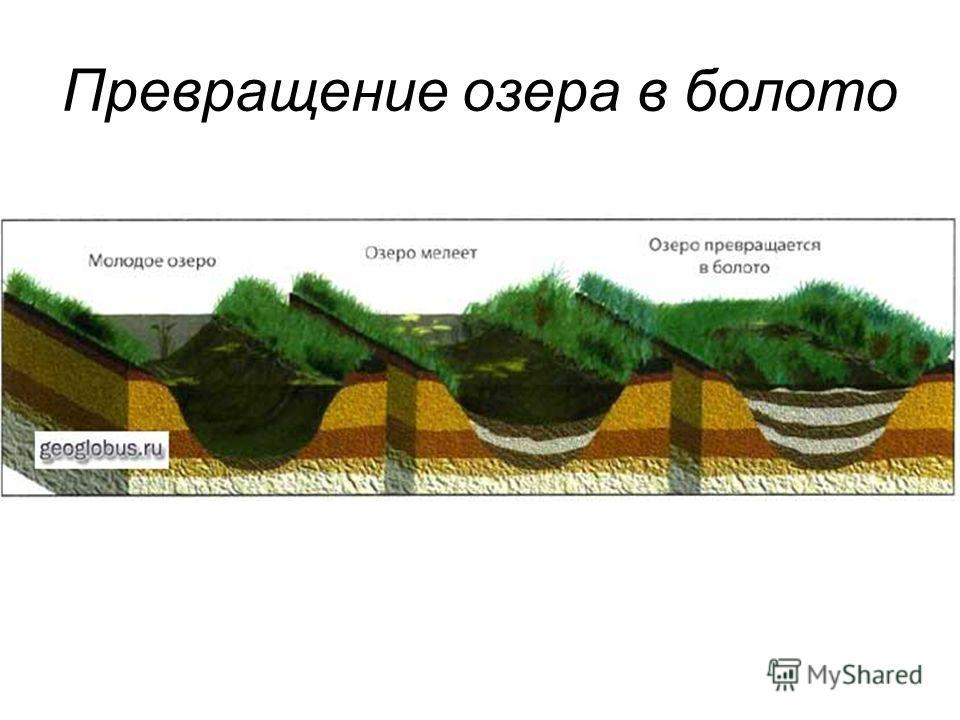 Превращение озера в болото