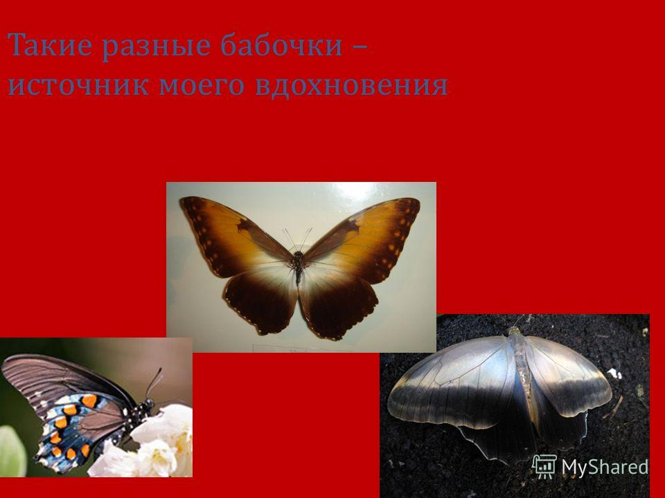 Такие разные бабочки – источник моего вдохновения