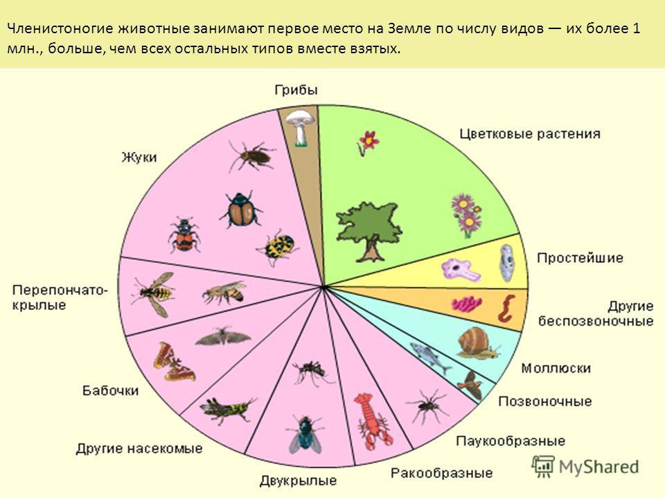 Общая характеристика типа Членистоногие (Arthropoda) Членистоногие животные занимают первое место на Земле по числу видов их более 1 млн., больше, чем всех остальных типов вместе взятых.