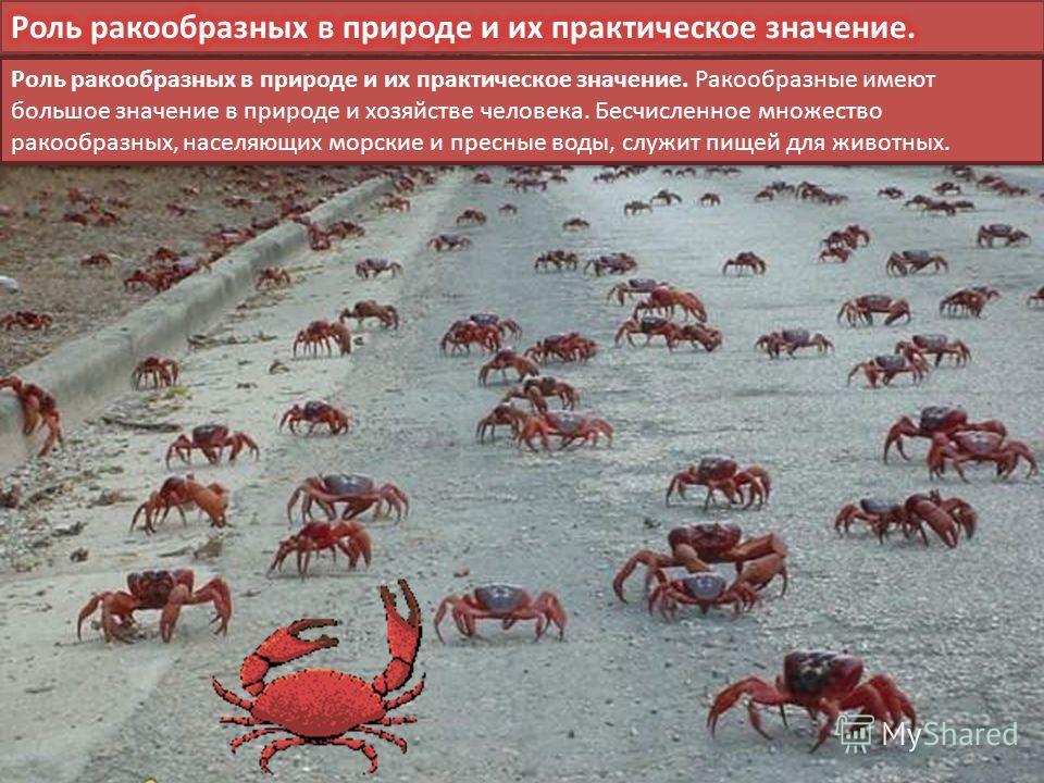 Роль ракообразных в природе и их практическое значение. Ракообразные имеют большое значение в природе и хозяйстве человека. Бесчисленное множество ракообразных, населяющих морские и пресные воды, служит пищей для животных.