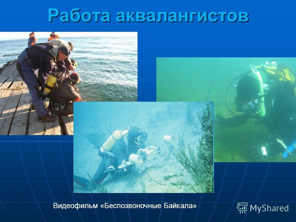 Работа аквалангистов Видеофильм «Беспозвоночные Байкала»