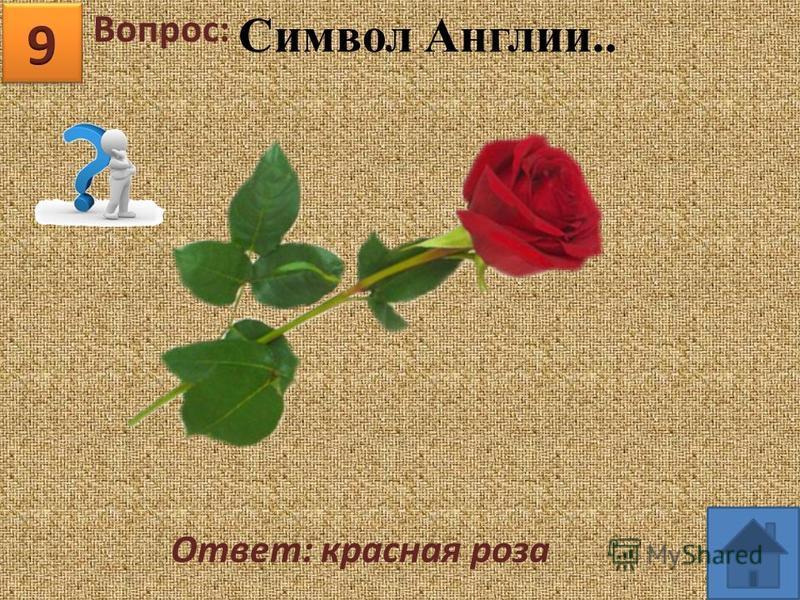 Вопрос: Ответ: красная роза Символ Англии..
