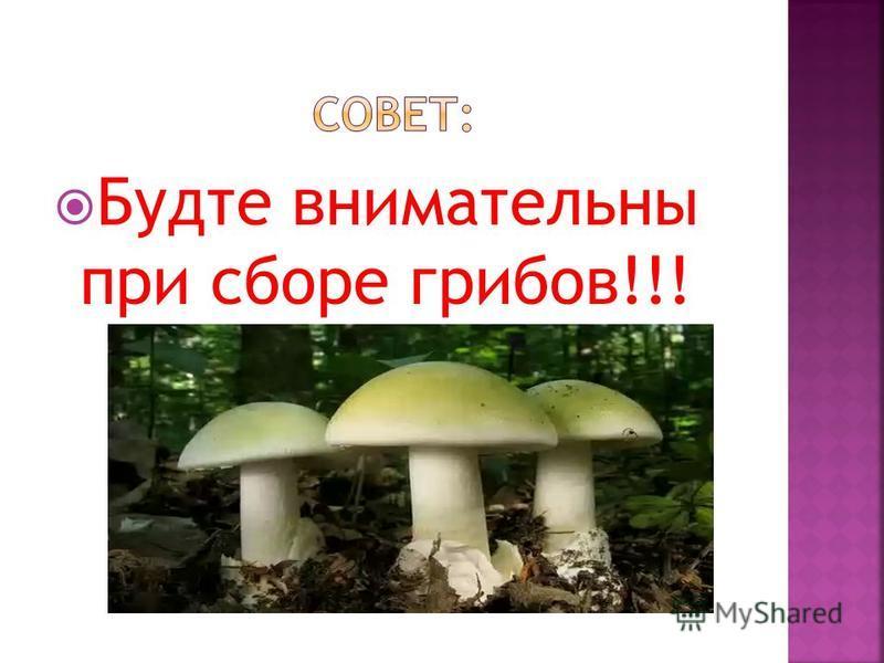 Будте внимательны при сборе грибов!!!