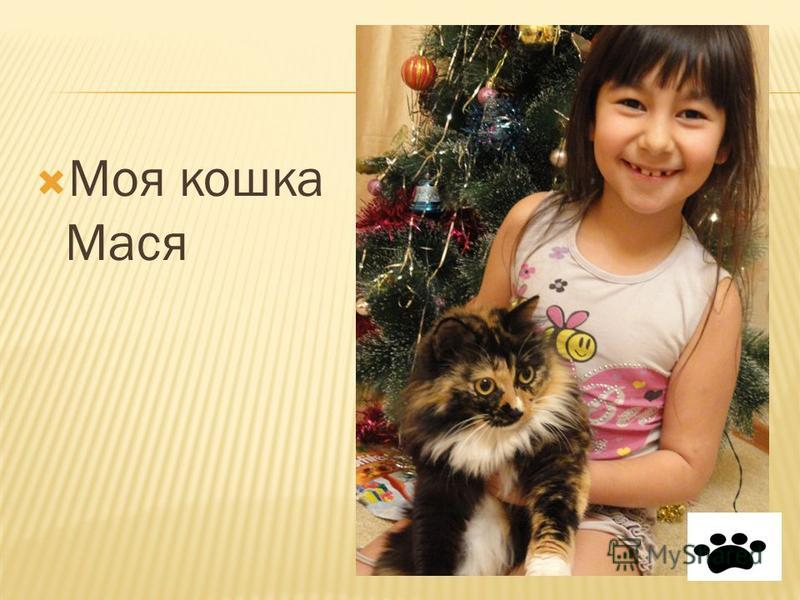Моя кошка Мася