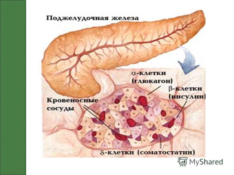 Народные средства 1 тип диабета
