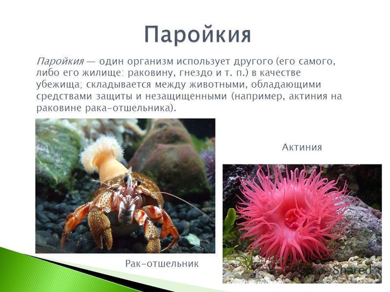 Паройкия один организм использует другого (его самого, либо его жилище: раковину, гнездо и т. п.) в качестве убежища; складывается между животными, обладающими средствами защиты и незащищенными (например, актиния на раковине рака-отшельника). Актиния